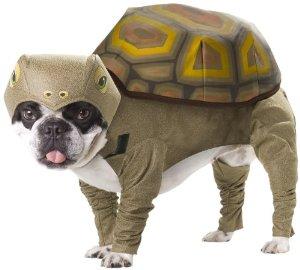 """""""亀"""" みたいな犬が発見される!"""