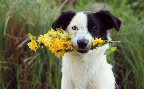 春の訪れを感じるような犬+花の画像3