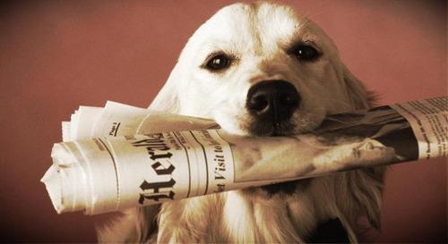 飼い主「誰か、新聞取ってきて~!」ゴールデンレトリバー「はーい