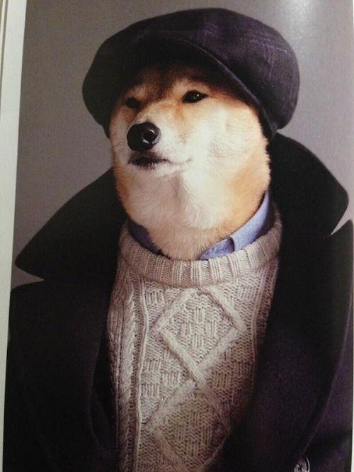 モデルは柴犬3
