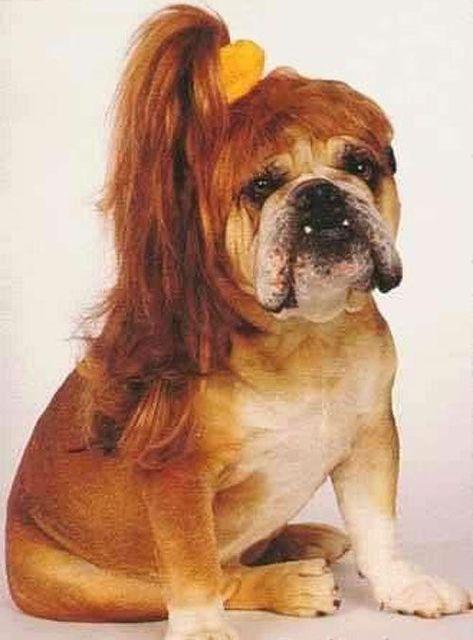 これより第一回美犬コンテストを開催します9