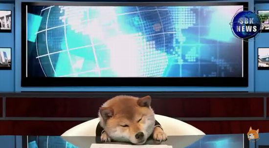 柴犬の犬山柴男キャスターが可愛すぎる3