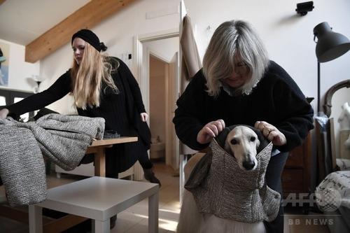 ミラノでは犬もオートクチュール3