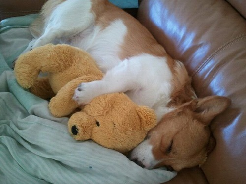 気持ち良さそうに寝てる犬の寝顔って良いよね29