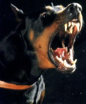 ドーベルマンに吠えられた柴犬の反撃方法