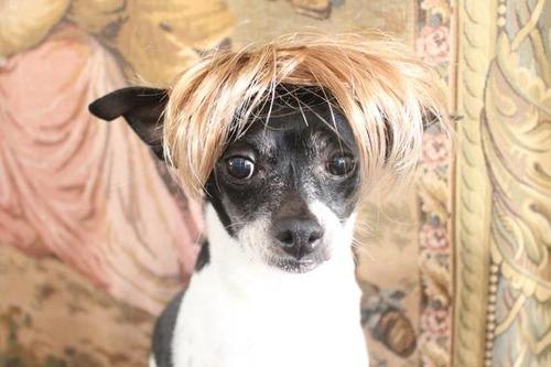 これより第一回美犬コンテストを開催します14
