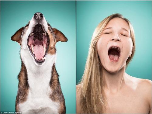 犬の性格は飼い主に似る9