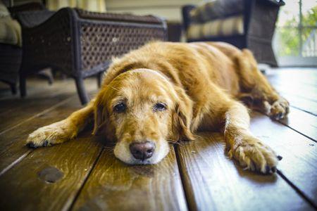 老犬の介護や病気・認知症について語るスレ