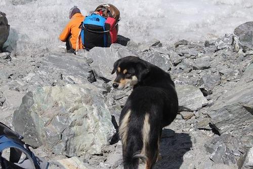 登山隊に付いてきた野良犬さん、バルンツェ登頂に成功