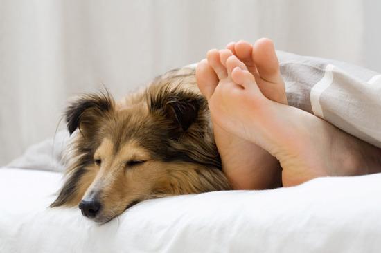 犬「寂しいから同じ部屋で寝てええか?」