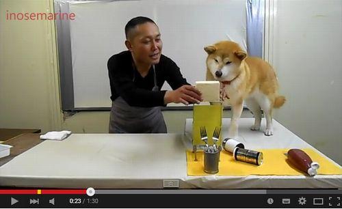 【動画】柴犬マリちゃんと冷や奴を作ってみよう!