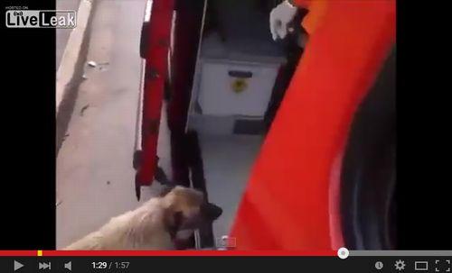 救急車で運ばれる飼い主を必死で追うワンコ4