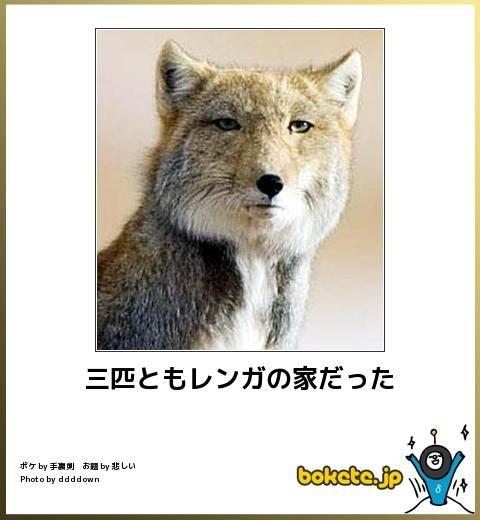動物のボケて画像貼りましょう8