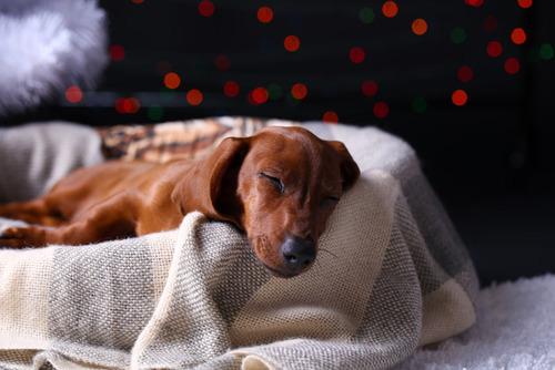 気持ち良さそうに寝てる犬の寝顔って良いよね10