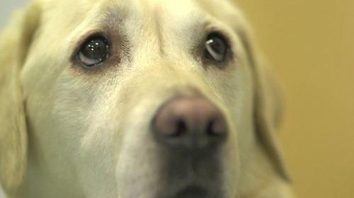 愛犬マジック、飼い主の命を「3500回救った」2