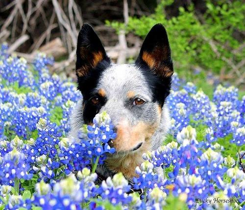 春の訪れを感じるような犬+花の画像12