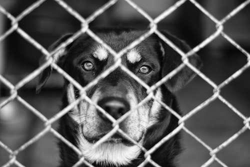 保護犬殺処分ゼロを掲げるNPO、不妊・去勢手術せず