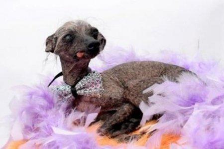 「世界で最もブサイクな犬大会」で3位になった犬が話題