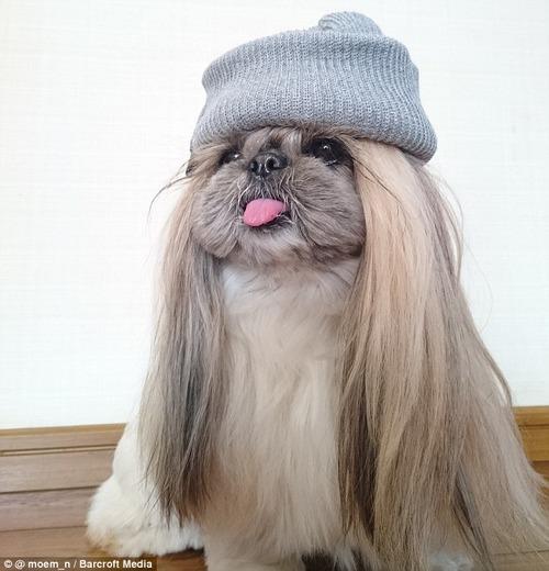これより第一回美犬コンテストを開催します10