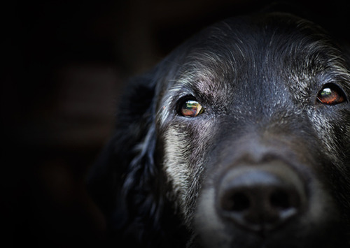 老いた犬の世話をする老犬ホーム どんな所?