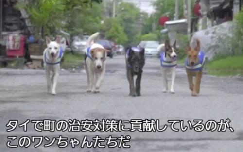 野良犬が「番犬」に、ライブ映像で町をパトロール