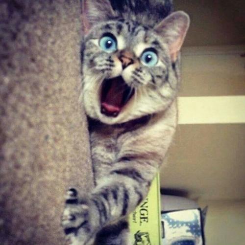 酉年から戌年に替わる瞬間を目撃してしまった猫2