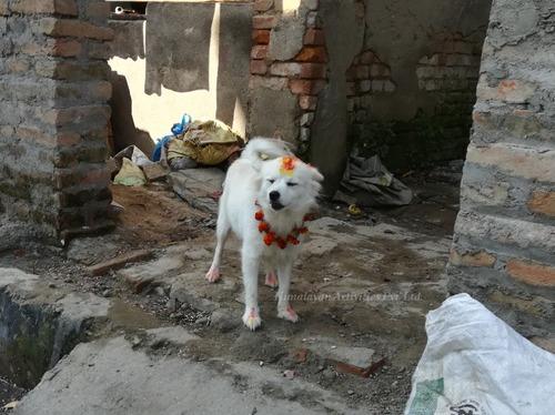 ネパールの犬のお祭「ククルティハール」