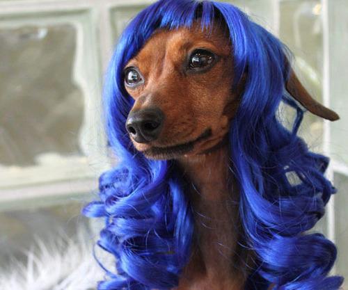 これより第一回美犬コンテストを開催します13