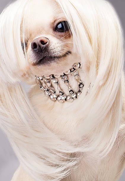 これより第一回美犬コンテストを開催します6