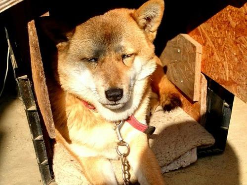 女子高生みたいな可愛い犬の別の日の顔2