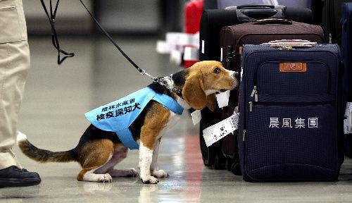 わい海外旅行民、空港で麻薬犬に付きまとわれる