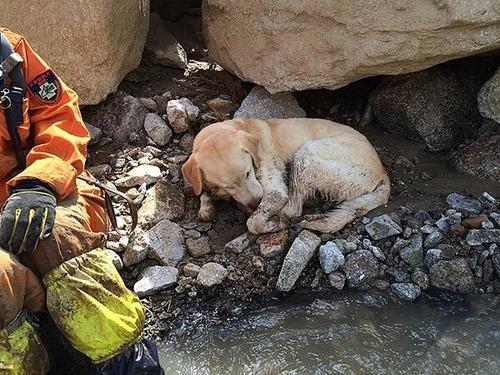 【西日本豪雨】84頭の災害救助犬が救助活動に参加4
