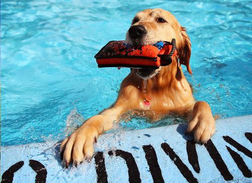 「泳ぐ犬」画像でも見て涼もう5