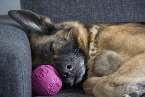 気持ち良さそうに寝てる犬の寝顔って良いよね20