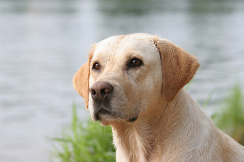 山で迷子になった少年を犬が2日にわたって温める