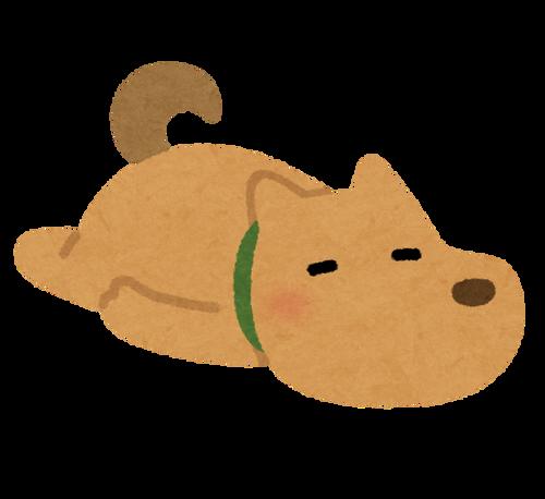 ワイの家の雑種犬