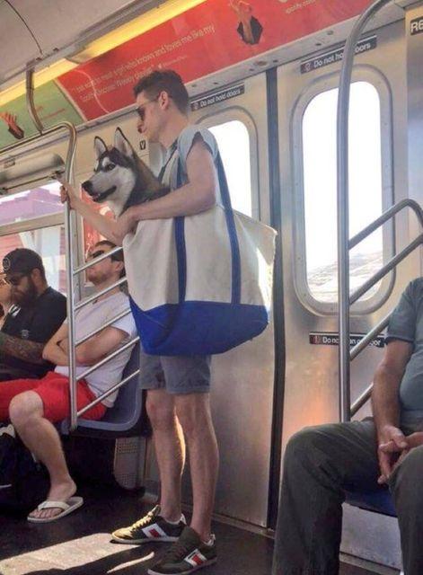 NY地下鉄「バッグに入らない動物の持ち込み禁止!」→ニューヨーカー「入ればいいわけね?OK!!」€