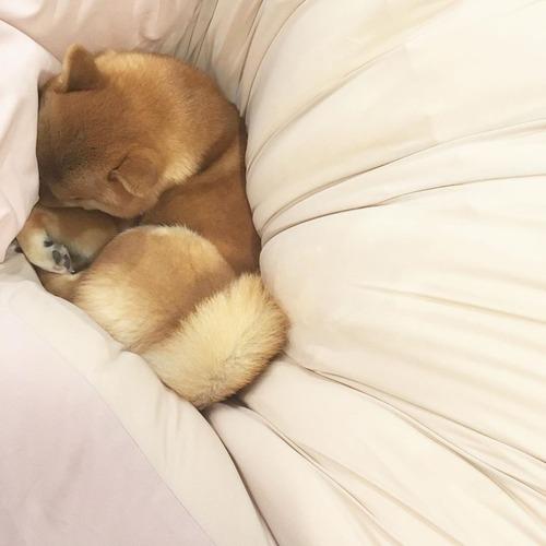 ワイ「イッヌ、その寝相寝づらくないか?」イッヌ「😪」