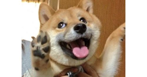 ある柴犬が見せた奇跡の一枚