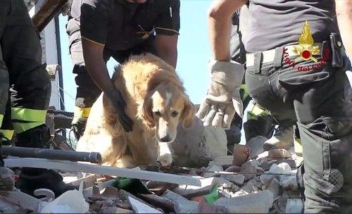 地震発生から9日、がれきの中から犬を救出 飼い主と再会 イタリア