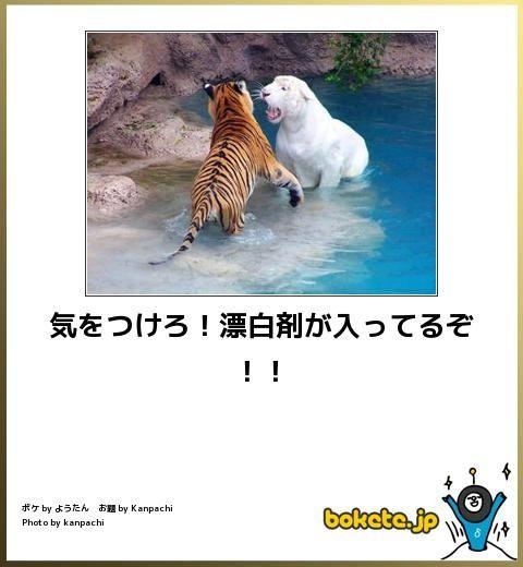 動物のボケて画像貼りましょう9