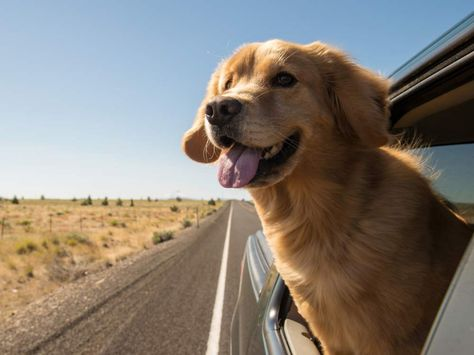車の窓から顔を出して風と戯れる犬画像9