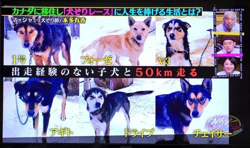犬ぞり師が6匹の子犬に付けた名前