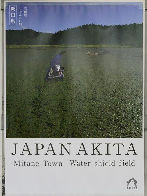 秋田県のポスターの秋田犬が可愛すぎる10