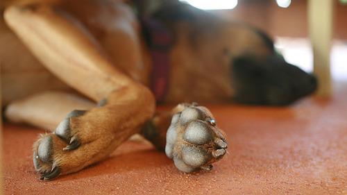 犬の前足の匂いフェチ