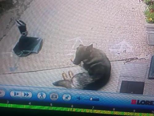 車上荒らしが高温の車内に取り残された犬を救う
