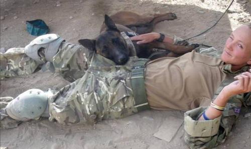 爆発物探知犬、37万人の署名により殺処分見直し3