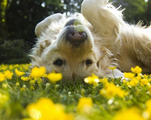 春の訪れを感じるような犬+花の画像8