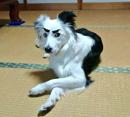愛犬にゴルゴ13の眉毛を付けてみた