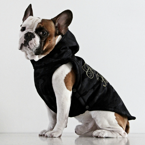 愛犬にダウンジャケット…ペットに「防寒具」は必要か?